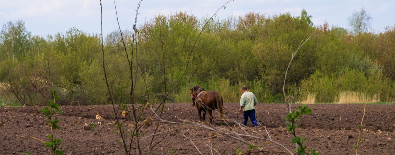 Экологическое сельское хозяйство