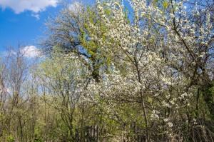Вяльки, весна